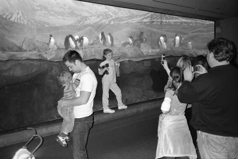 Penguin Photography, Tennessee Aquarium, Chatanooga, Tennessee, 2008